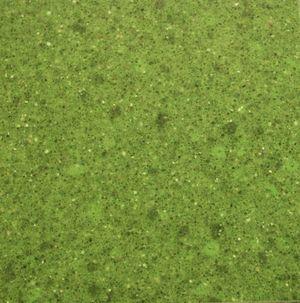 Bicolore vert